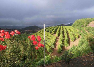 the_summit_360_San Mateo vineyard san mateo