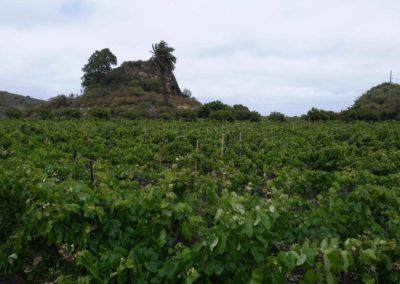 the_valley_and_the_volcano_plaza perdida vineyards Bandama