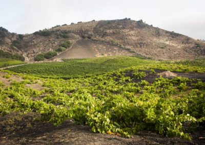 the_valley_and_the_volcano_volcanic vineyards bandama